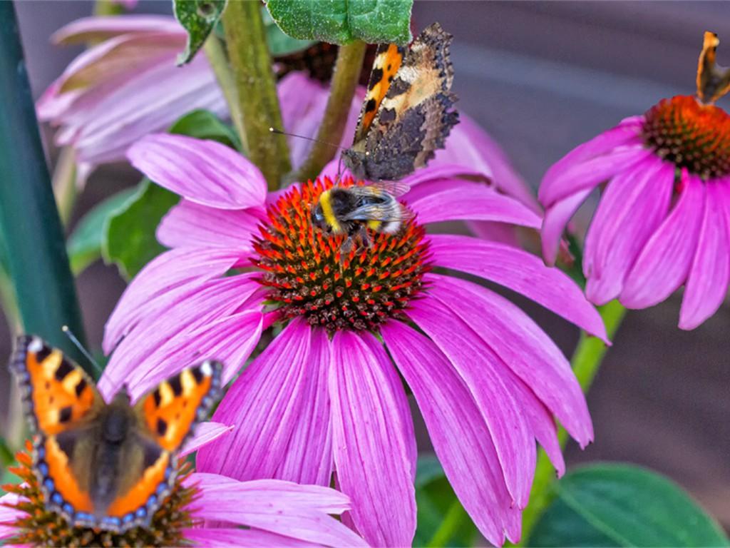 Und noch mehr Schmetterlinge