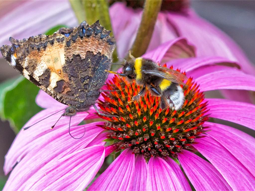 Attacke! gegen den aufdringlichen Schmetterling